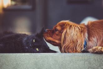 Jak na odčervení psů a koček