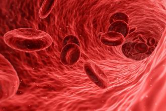 Jak pomoci krvetvorbě